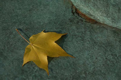 Autumn leaf on bronze sculpture