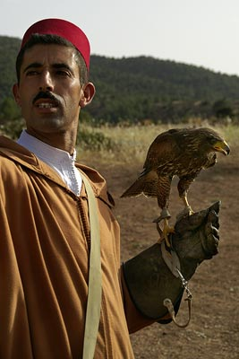 bird of prey trainer, Marrakech